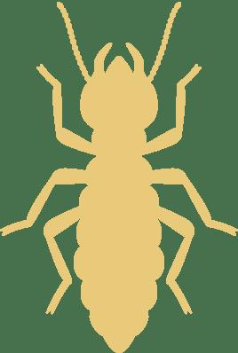 gold termite icon