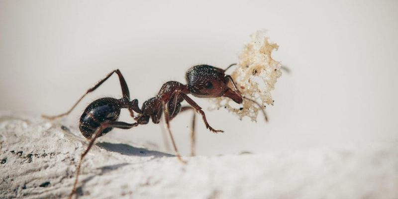 Ant sitting on the ground